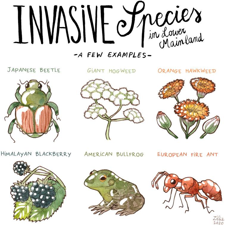 Invasive species in Lower Mainland